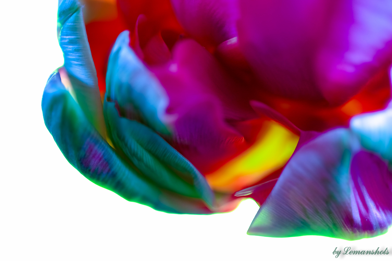 Colour vibrant blossom.