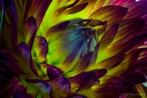 Blütefinished