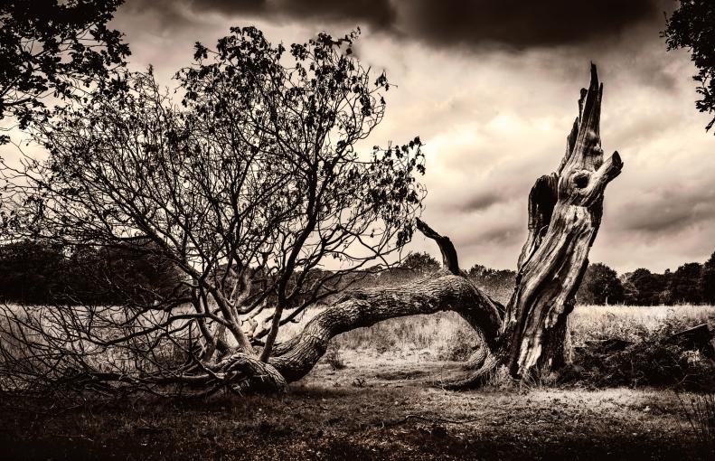 Toter-Baum1
