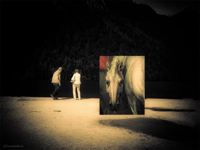 Lemanshots_Horse